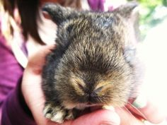 Bunny Nose! - September 25, 2011