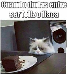 Read secreto from the story TU SECRETO + MEMES (meta: lecturas) by SiloDeFelippe (SILO) with reads. Funny Cats, Funny Jokes, Funny Animals, Hilarious, Memes Humor, Bts Memes, Comedy Memes, Funny Spanish Memes, Spanish Humor