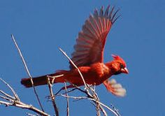 Una de las especies a aves muy reconocidas para todos los visitantes http://aktun-chen.com/es/