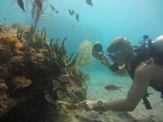 Coral Cay Conservation Montserrat Caribbean Diving Expedition Marine Volunteer Programme Terrestrial Reef