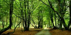 La forêt du mont Beuvray dans la #Nievre !