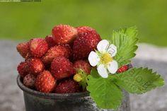 Metsämansikka-asetelma - marja marjat mansikka mansikat kesä  metsämansikka metsämansikat  punainen punaiset  asetelma muki  hx2.0