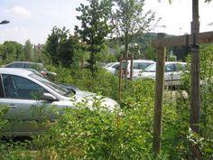 Parking paysager Car Park Design, Parking Design, Car Parks, Water Management, Parking Lot, Sustainability, Nature, Island, City