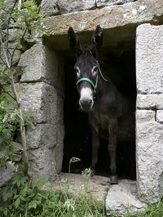 Un burro normal. Cortesía: Jose Luis Canales, La Concha (Spain).