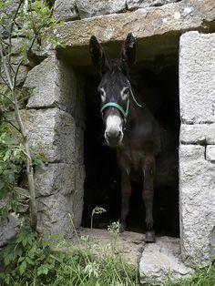 Un burro normal. Cortesía: Jose Luis Canales, La Concha (Spain).