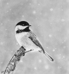 Pencil Drawing of Chickadee, Amazing Pencil Drawings, http://hative.com/50-amazing-pencil-drawings/,