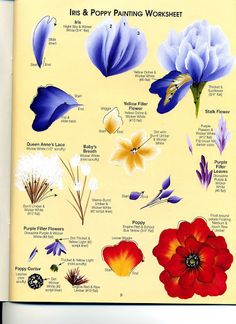 Iris & Poppy Worksheet