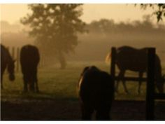 9131 160th Ave, Bristol, WI 53104 — If you enjoy having your morning coffee watching the sunrise and hearing the soft nicker of your horses welcome your day. Look no further...You are home! This magical 10 acre horse farm is situated just across the IL/WI border, halfway between Milwaukee and Chicago, is less than 3 Miles to I-94 and only 1/2 hour to Lake Geneva, WI and Lake Forest, IL. This property is a perfect ''10''