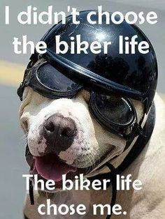 Does anyone else feel this way? #motorcycles #biker # [ www.CyclePartsAlley.com ]