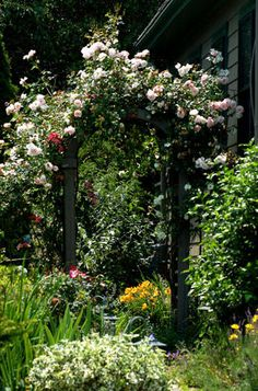 Climbing roses are nice over archways. The climbing roses in this picture are light pink in color.