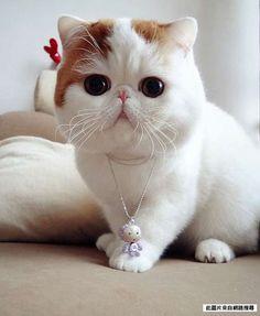 太犯規了!!!這隻貓應該有被偷偷修圖吧!