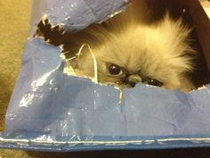 I don't care how much tuna you wave at me.  I am NOT coming out.