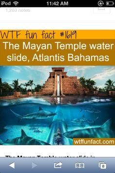 WTF fun fact #1619