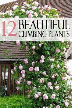 Take a minute to learn 12 beautiful climbing plants for your home!