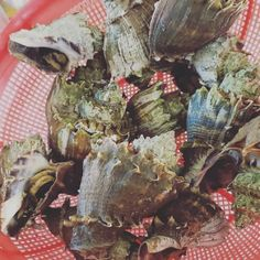 Sea Snails for lunch. Haven't had snail in minute. Its all about that ginger sause. And a good beer after. #sea #snails #lunch #ginger #sause beer #seafood #bemaifoodie