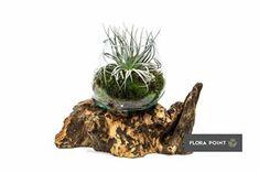 Terraria, Flora, Plants, Diy, Terrariums, Bricolage, Do It Yourself, Plant, Homemade