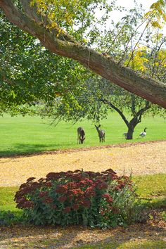 Two young deer enjoying a visit to our farm on a beautiful fall day!