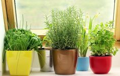 Growing herbs indoors has never been easier with these simple tips and tricks.