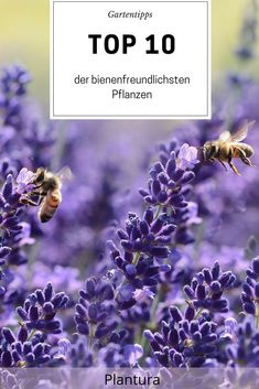 Die 126 Besten Bilder Von Bienen Und Insektenfreundlicher Garten In