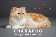 J-6 avant le lancement de Chabadog, le 28 Février 2015, en compagnie de Gratin. https://fr.chabadog.com/