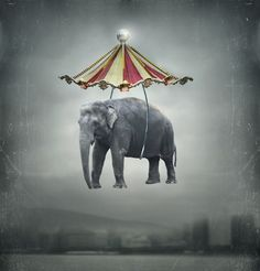 http://clubresortintervals.tumblr.com/post/106071216523/not-the-circus-i-remember