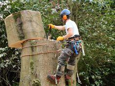 North Sydney Tree Services is a family owned and operated business based in We specialize in all work. Tree Arborist, Tree Removal Service, Tree Surgeons, Tree Felling, Tree Pruning, Tree Company, Pink Trees, Old Trees, Tree Care