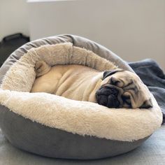 Pinned To #pug A Pug With Love