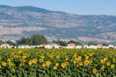 Campos de Israel