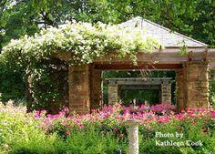For bridal portraits at Fort Worth Botanical Gardens Run Away With Me, Running Away, Bridal Portraits, Fort Worth, Beautiful Landscapes, Botanical Gardens, Bonsai, Lush, Vacations