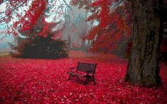 Autumn, background, bench, blood, carpet, leaves, red, sea, serene, surrounded, tree