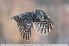 The Ultimate Wildlife Photography Tutorial