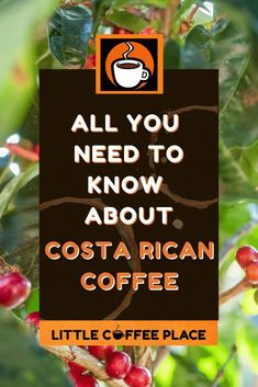 Everything you should know about Costa Rican Coffee and why it is some of the best quality coffee in the world! #littlecoffeeplace #costarica #coffee #costaricancoffee Costa Rica Coffee, Coffee Guide, Coffee Facts, Little's Coffee, Coffee Drinkers, Need To Know, Fun Facts, Coffee Lovers, Funny Facts