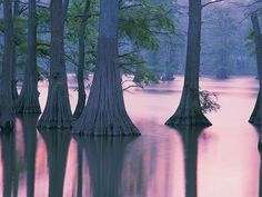 Horseshoe Lake Conservation Area.  I really want to see some bald cypress trees