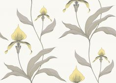 Orchid (95/10057) - Cole & Son Wallpapers - Make an impact with this stunning pale yellow orchid design, grey leaves and a off white background – perfect for feature walls. Available in other colours. Please ask for a sample for a true colour match.