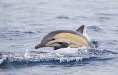 Underwater Creatures, Underwater World, Common Dolphin, Marine Ecosystem, Animal 2, Killer Whales, Sea World, Ocean Life, Marine Life