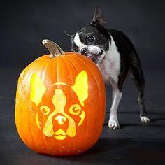 Doggie Pumpkin carvings