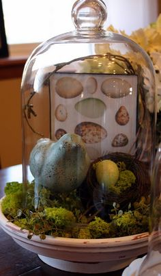 Bird, eggs, nest, moss, cloche vignette - for the new gardeny booth?