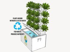 Aquaponics, Lettuce Evolve, Hydroponics, Aquaculture, Grow your own, Vertical farming, chemical free, compact garden #verticalfarming #hydroponicslettuce