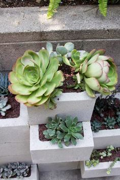 DIY concrete block wall planter. Great for succulent garden or herbs! Remember to seal the inside and drill some drainage holes. Blocks aren't waterproof! Dark colours will contract the greens more!