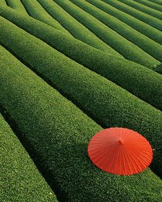 China is one of the major producers of tea in the world. The coastal areas of China have Fields of Tea. Hangzhou, Japan Design, Places Around The World, Around The Worlds, Beautiful World, Beautiful Places, Amazing Places, Parasols, Umbrellas