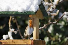 Bird Table Bird Tables, The Last Leaf, Beautiful Winter Scenes, English Christmas, Covered Garden, Christmas Preparation, Open Fires, Cold Night, The 5th Of November