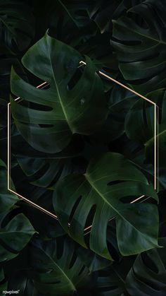 Hexagon golden frame on a tropical background vector premium image by Adj HwangMangjoo marinemynt Wallpaper Free, Plant Wallpaper, Framed Wallpaper, Tropical Wallpaper, Iphone Background Wallpaper, Cellphone Wallpaper, Aesthetic Iphone Wallpaper, Flower Wallpaper, Phone Backgrounds