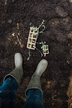 Stock photo of gardening boots with little seedlings by LeaJones Planting Vegetables, Vegetable Garden, Gardening For Beginners, Gardening Tips, Gardening Photography, Garden Boots, Bokashi, Farm Gardens, Dream Garden
