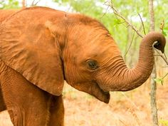 Elefantenwaise in Sambia (c) A. Kirchhoff