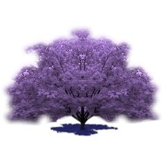 arbres - Page 3 ❤ liked on Polyvore featuring trees, backgrounds, garden and purple