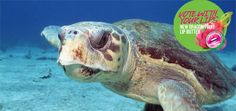 Sea Turtle Restoration Project