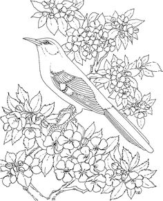 Free Printable Coloring Page - Arkansas State Bird and Flower: Mockingbird, Apple Blossom, educational printables