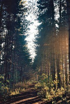 Silencioso camino