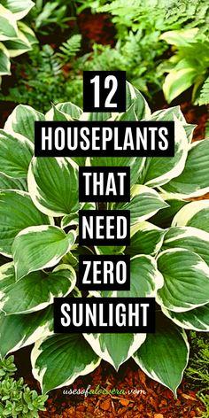 Indoor Plants Low Light, Best Indoor Plants, Outdoor Plants, Indoor Garden, Patio Plants, Garden Planters, Easy House Plants, House Plants Decor, Plant Decor