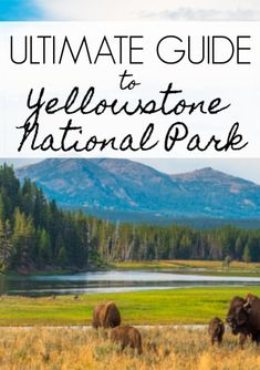 Your Ultimate Guide to Yellowstone National Park - Go to Travel Gal Arizona Travel, Texas Travel, Florida Travel, Travel Usa, National Parks Map, Yellowstone National Park Hotels, Travel Around The World, Around The Worlds, West Yellowstone